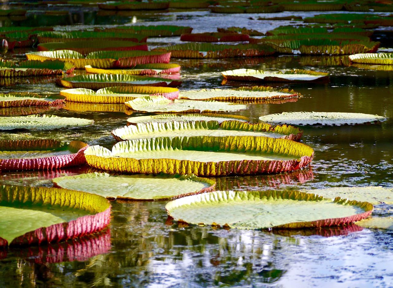 Poznaj 5 najpiękniejszych miejsc na Mauritiusie
